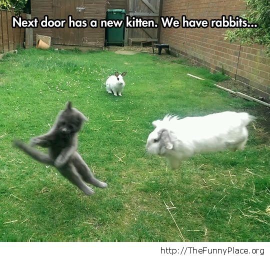 Rabit vs kitty