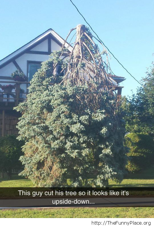 Reverse tree