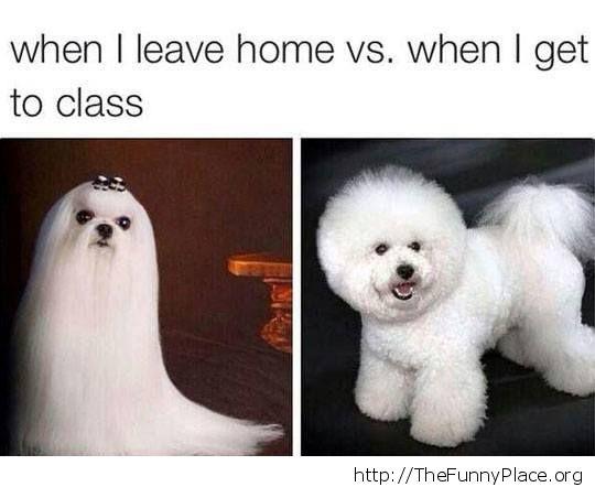 Same dog