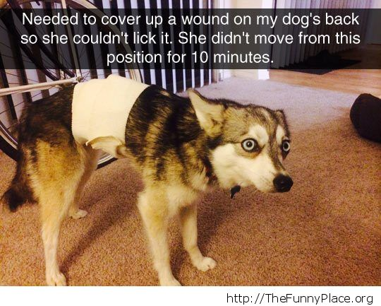 Scared dog face