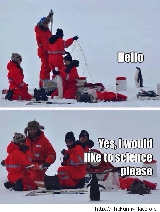 Scientists and penguin