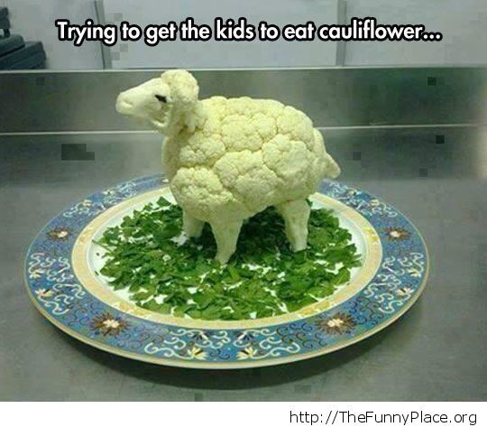Sheep dish