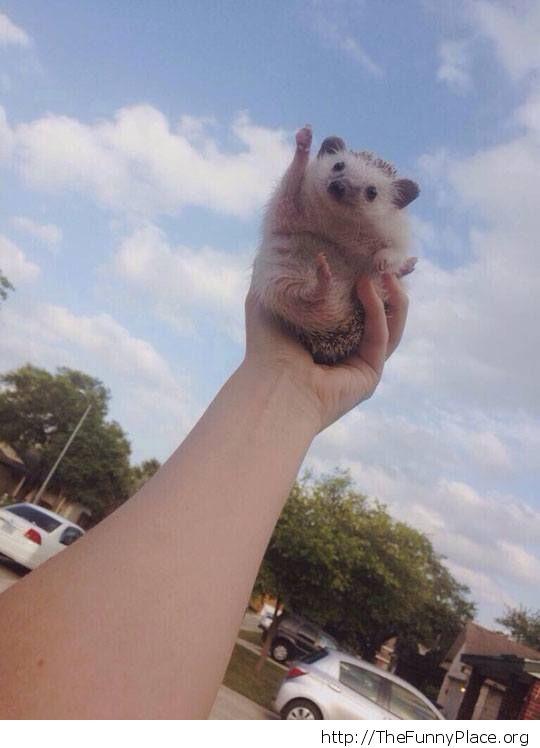 Thumbs-up hedhehog