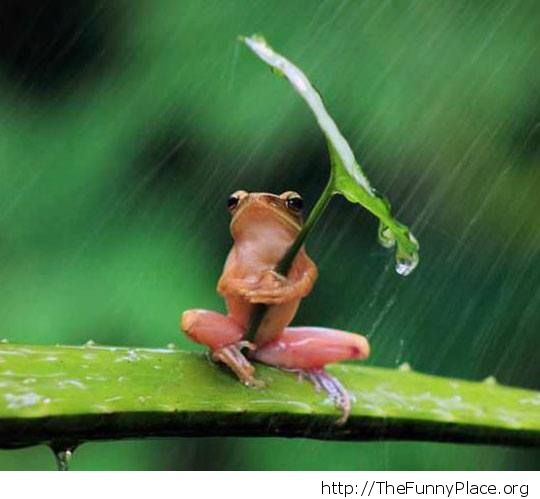 funny frog under umbrella