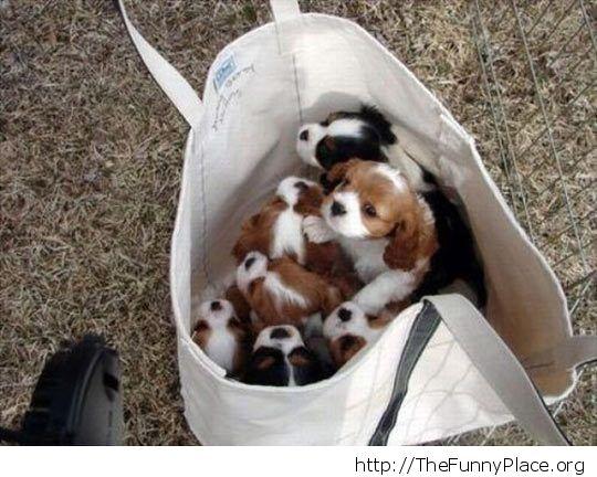 Bag of cuteness