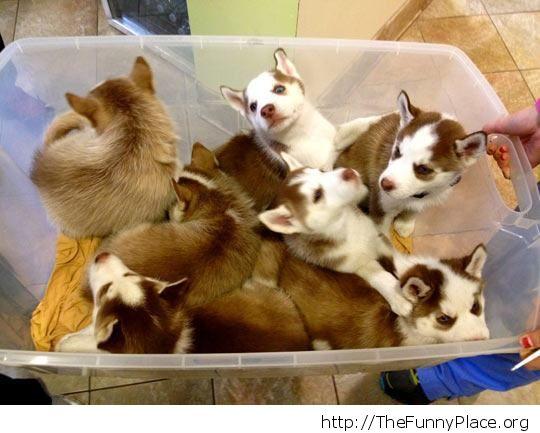 Box of cutenes