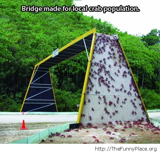 Crab bridge