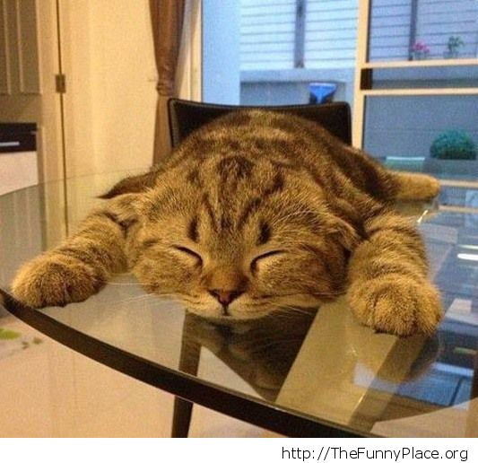 Planking level cat