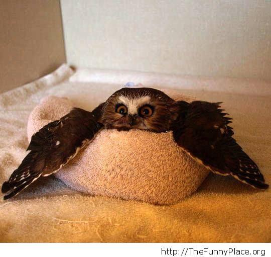 Planking owl