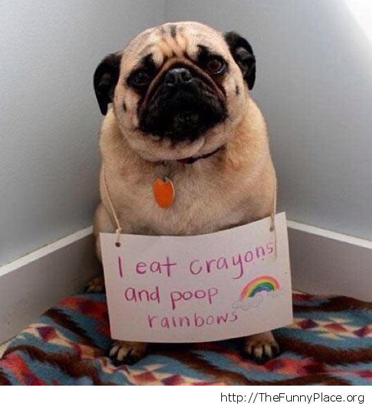 Poop rainbows