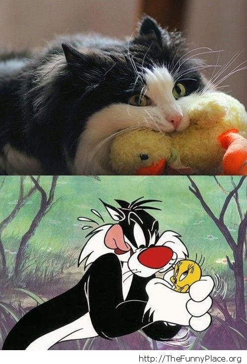 Sylvester in reaal life