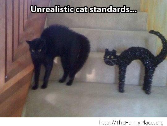 cat standards
