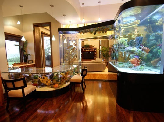 Fish tank table and beyond