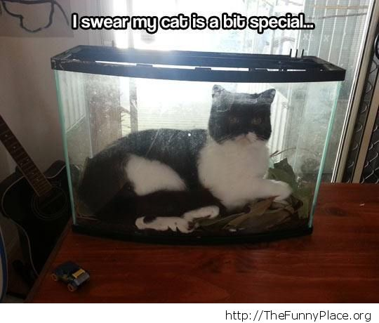 Her own fish tank