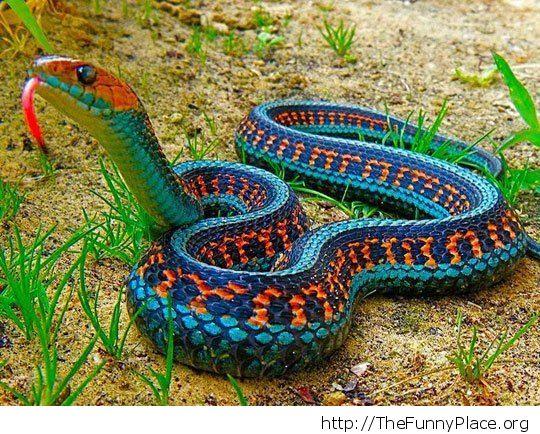 Incked snake