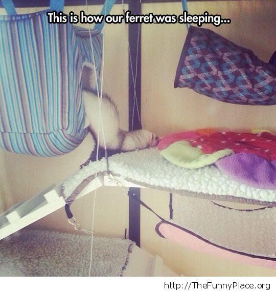 Planking ferret