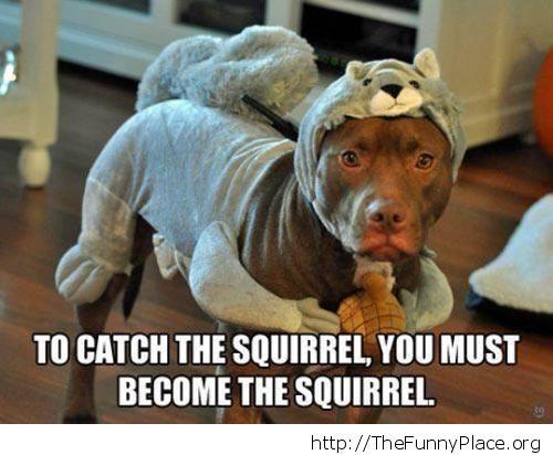 Squirrel suit