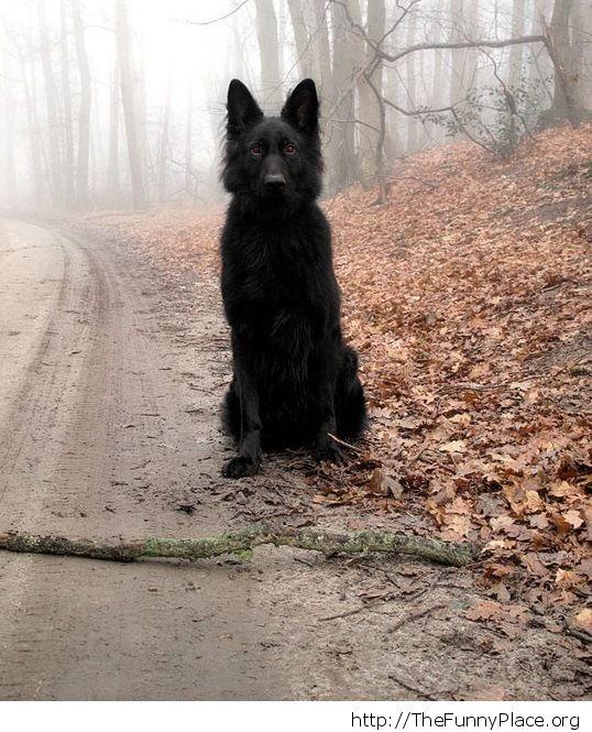 The black hound