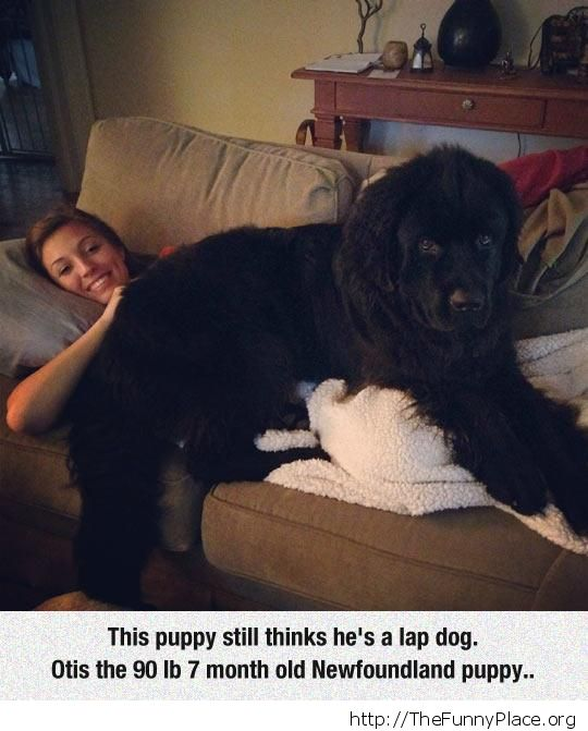 A little big for lap sitting