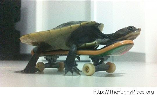 New skater
