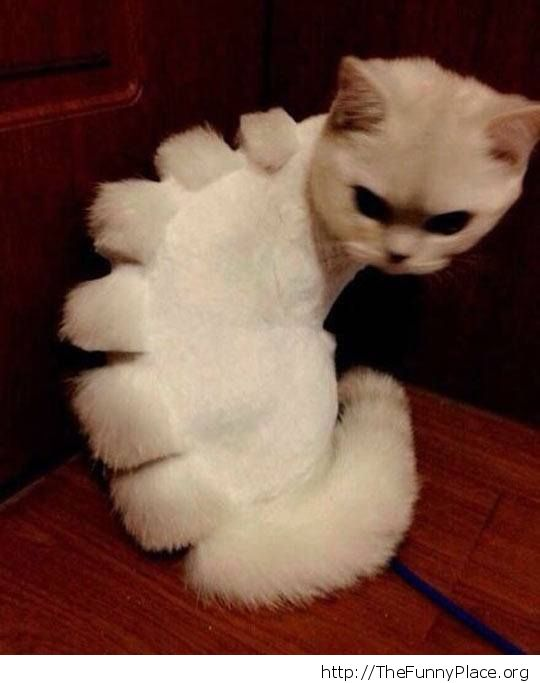 Shaved dinosaur cat