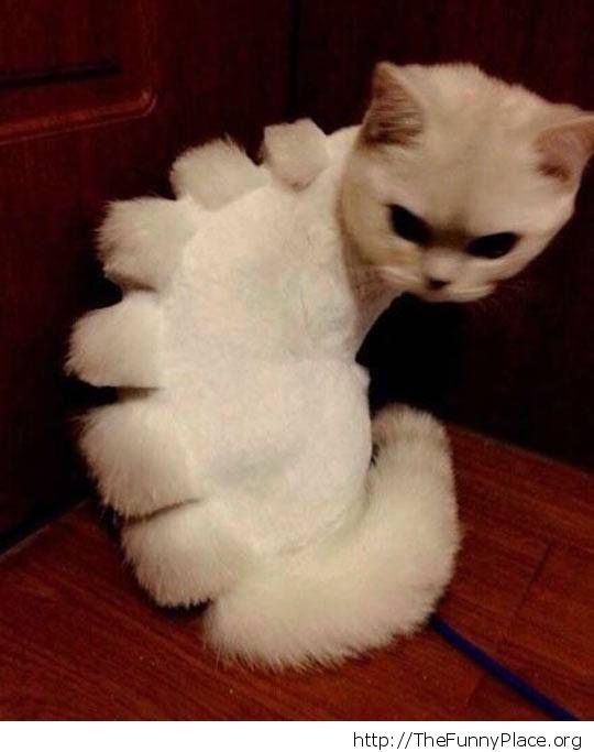 Shaved dinosaur cat