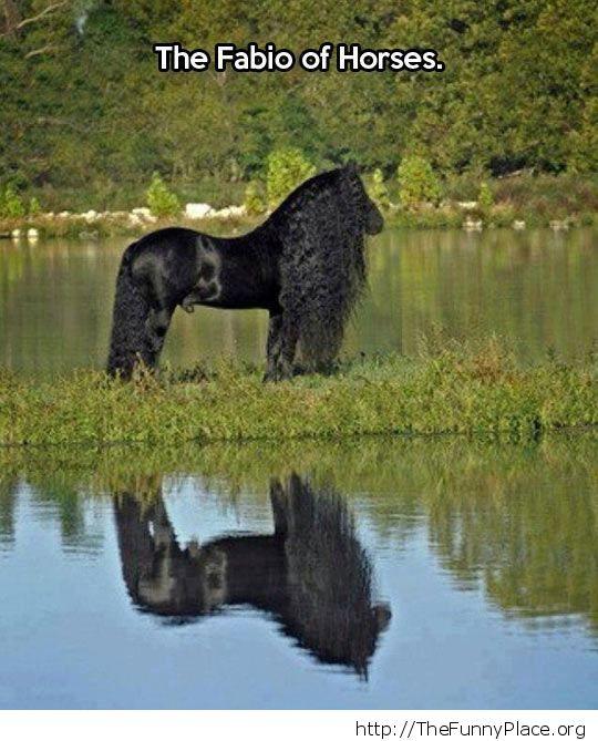 Latino horse