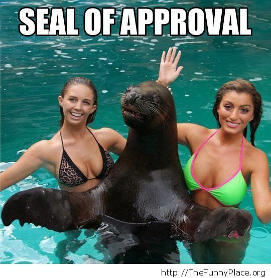 Seal pimp