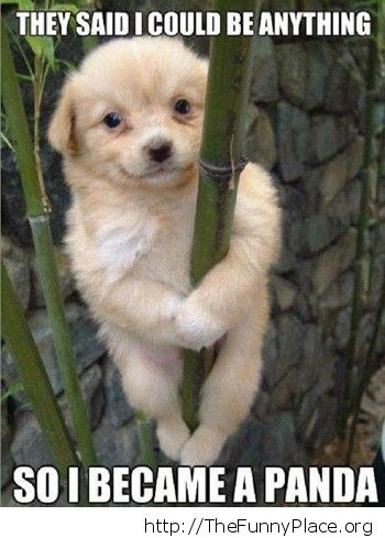 Became a panda
