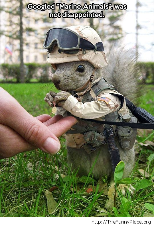 Combat squirrel