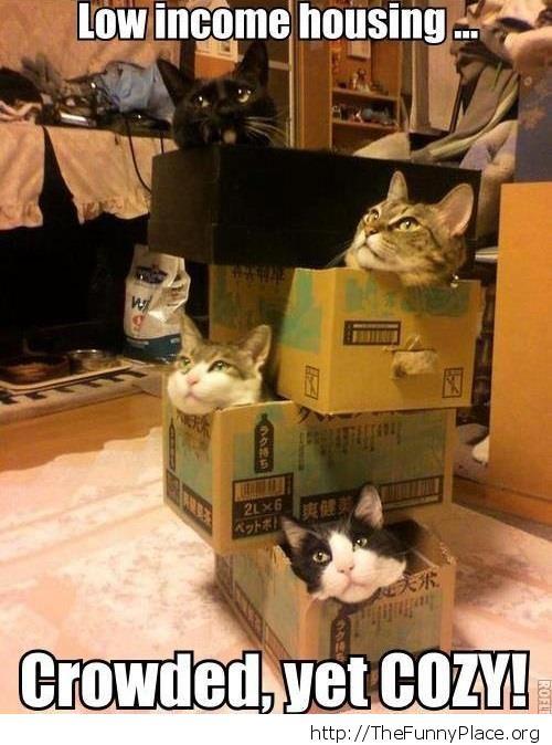 Cozy houses