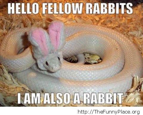 Snake rabbit