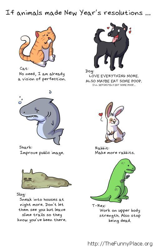 Animals new year's resolutions