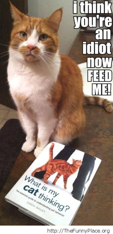 Guide to understanding pet