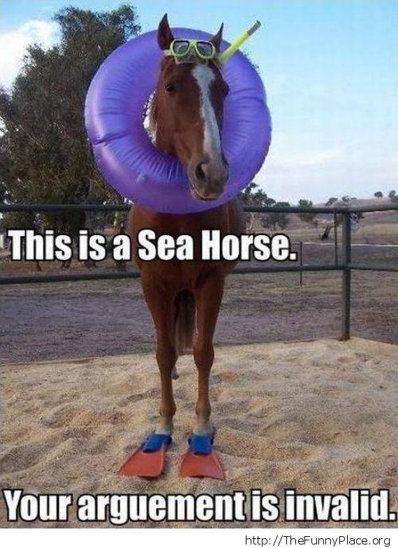 A sea horse