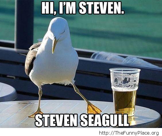 I'm Steven Seagull