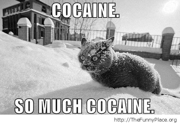So much cocaine