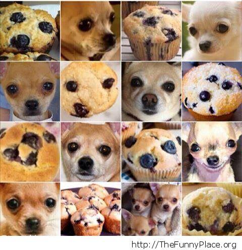 Dog & Muffin
